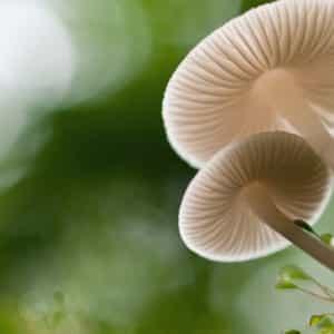 Les champignons sont parmi nous